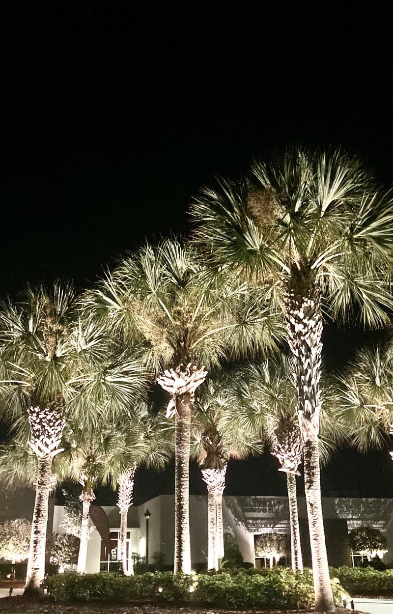 Palm Tree LED Lighting Land O Lakes